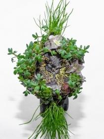 亨利慕时MOSER NATURE WATCH:一款旨在反应生态系统脆弱性的创新腕表。让我们共同努力,保护生态环境!